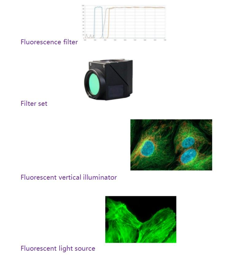 Fluorescent Biological Microscope